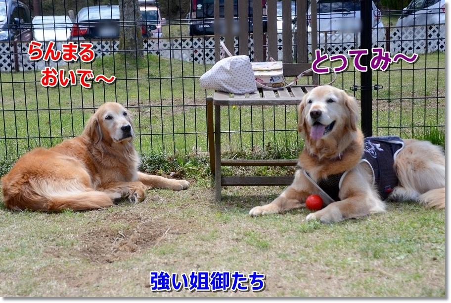 DSC_4463最強のお姉ちゃん達