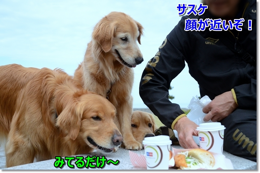 DSC_4534鯖サンド
