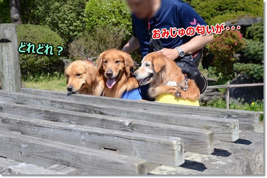 DSC_4674おみじゅの匂い・・・みえない