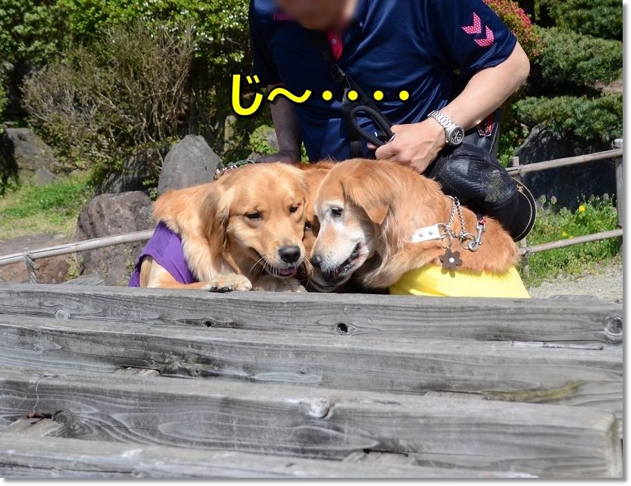 DSC_4675じ~・・・ - コピー