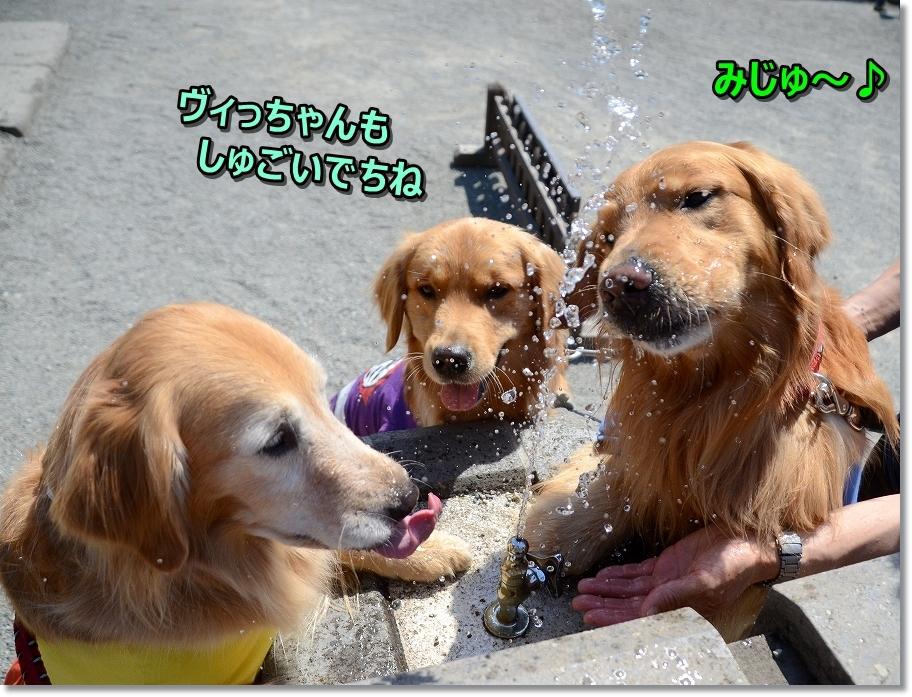 DSC_4686ヴィっちゃんもしゅげ~