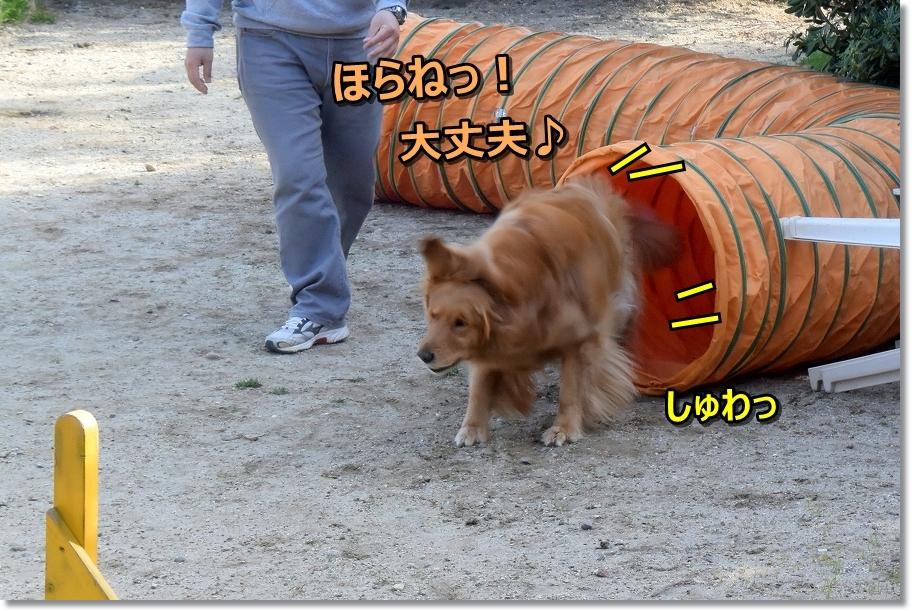 DSC_7531平気!しゅわっ