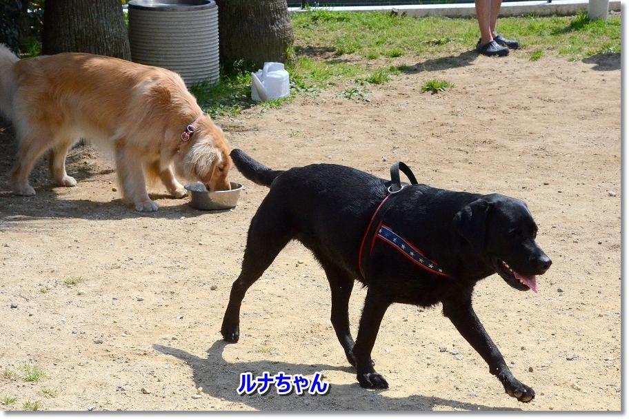 DSC_3290ルナちゃん