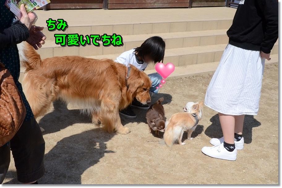 DSC_3311小型犬につきまとったり