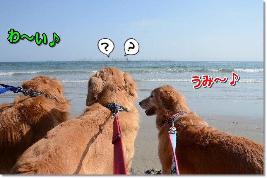 DSC_3322海~♪