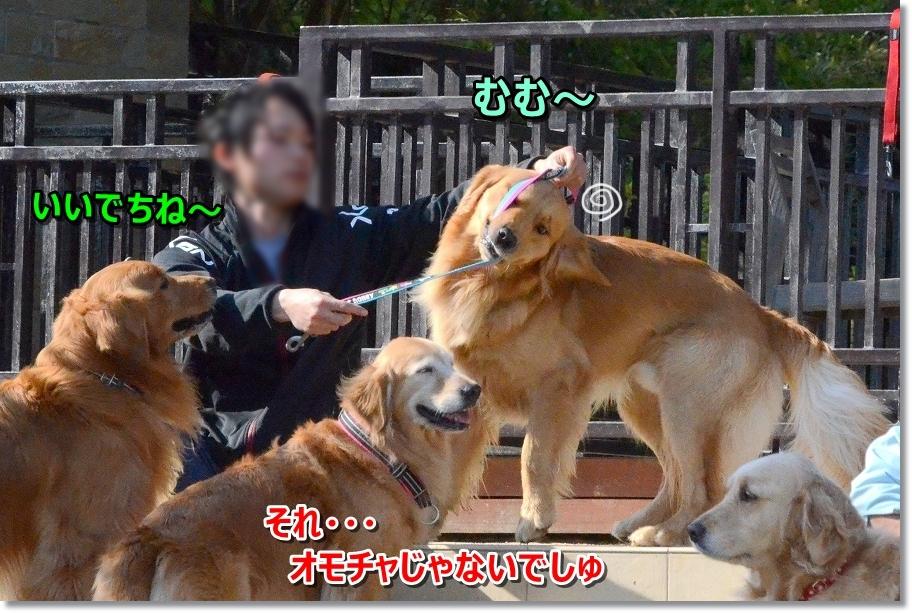 DSC_3400むっき~リード遊び