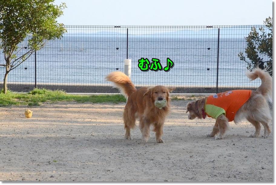 DSC_3636こっち~