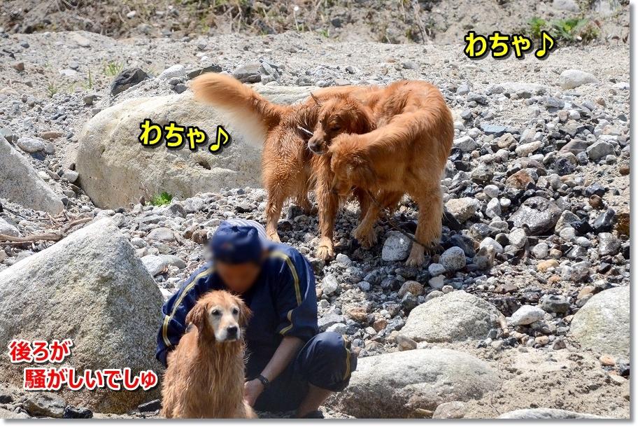 DSC_3718わちゃ