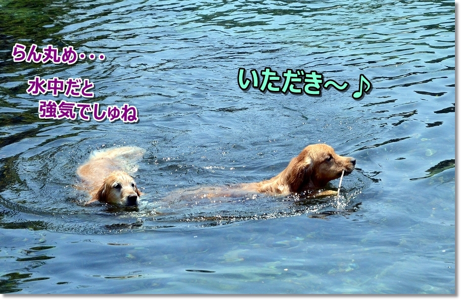 DSC_3724らんめ 水の中では強気でしゅね