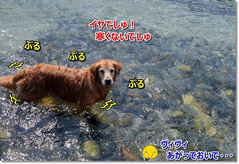 DSC_3890寒ないでしゅ・・ぷるぷる