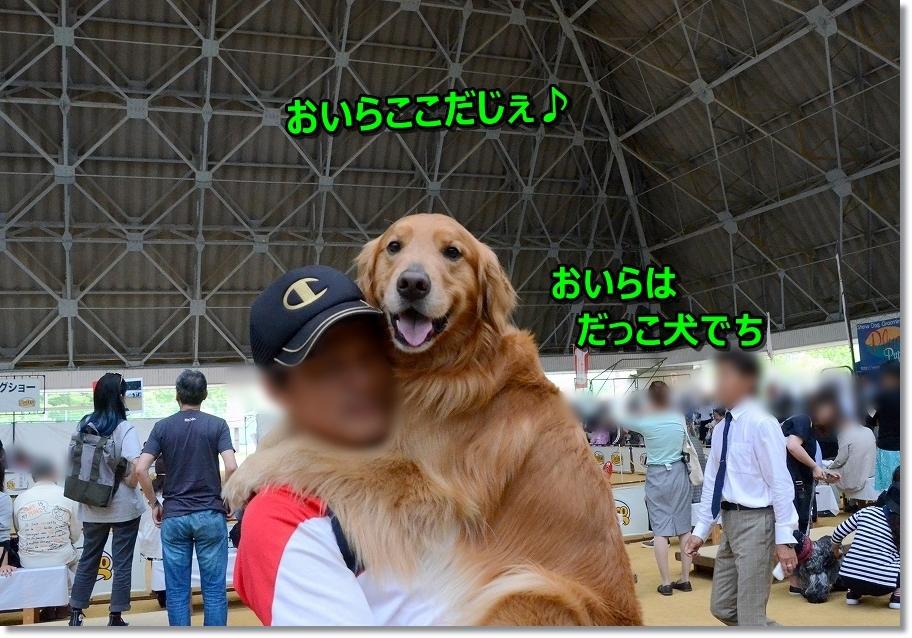 DSC_4999おいら抱っこ犬がいい