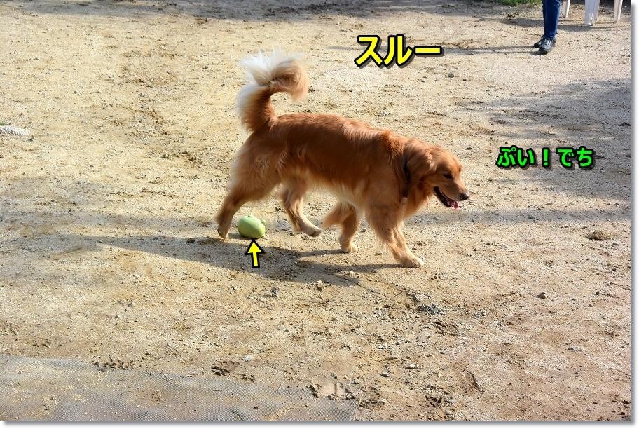 DSC_7606ぷい