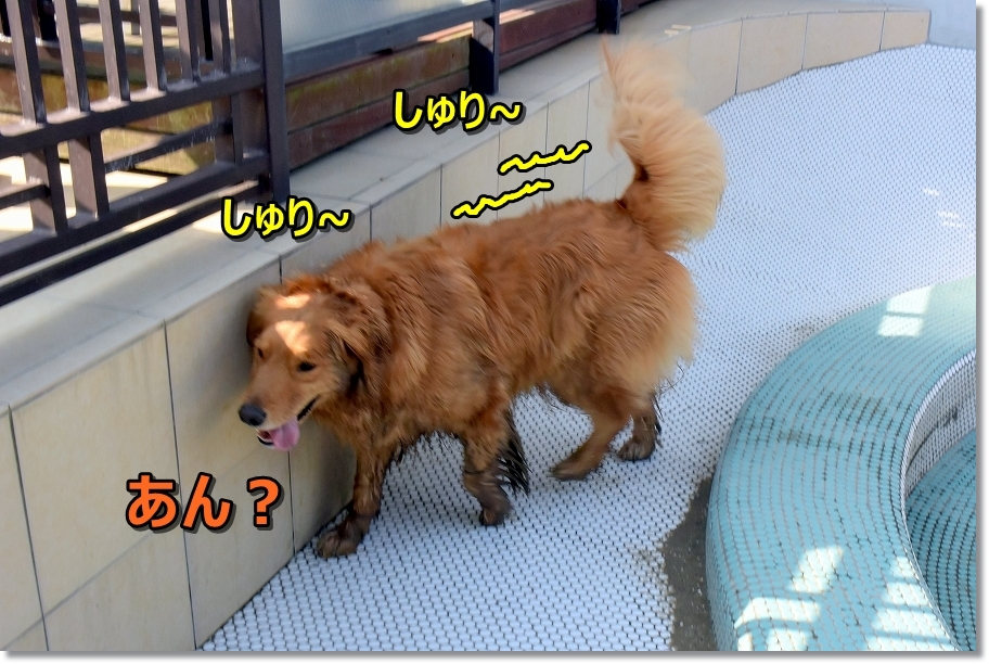 DSC_7656あん?