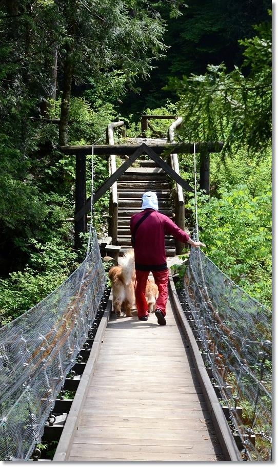 DSC_5490ワンコと一緒は不安な吊り橋でした