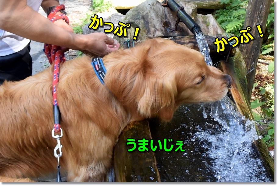 DSC_8078かっぷかっぷ
