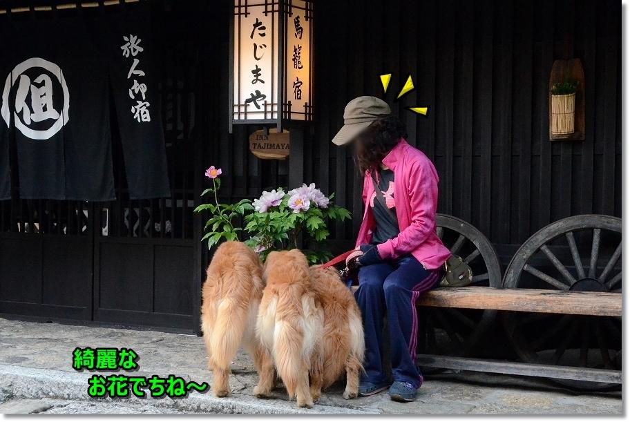 DSC_5601綺麗なお花でちね~くんくら