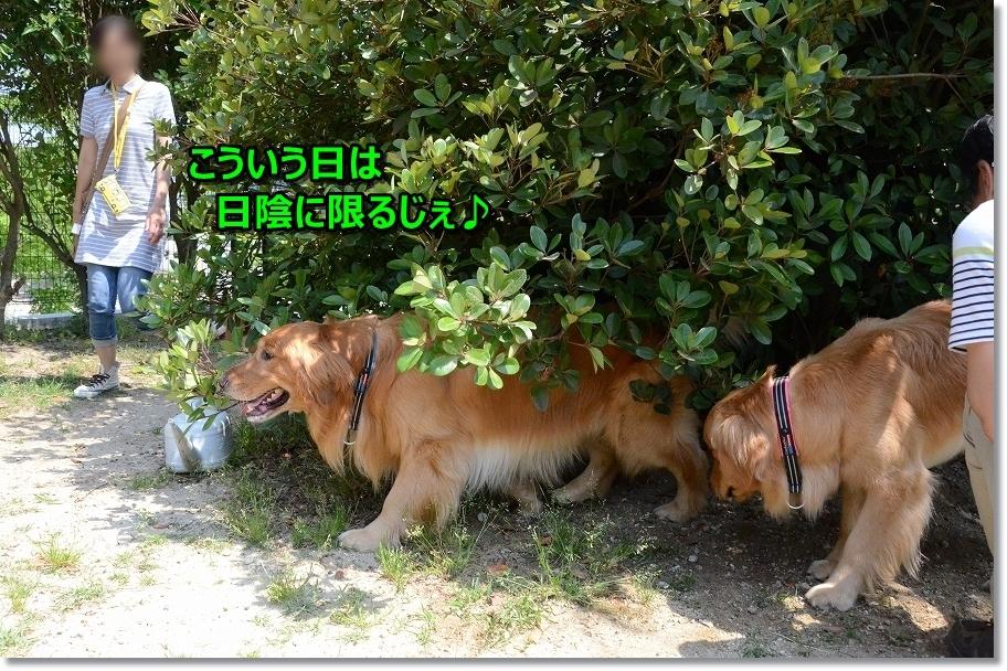 DSC_5973アニーちゃん?