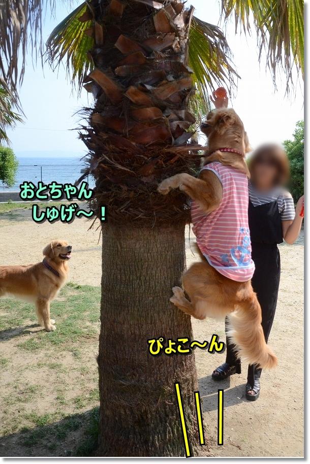 DSC_6019おとちゃんファイト~