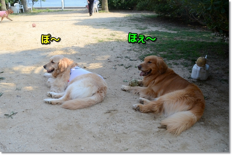 DSC_6037ほぇ~
