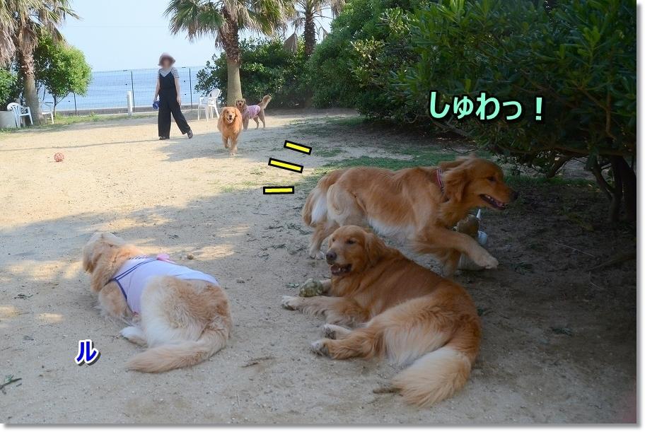 DSC_6041しゅわ ??