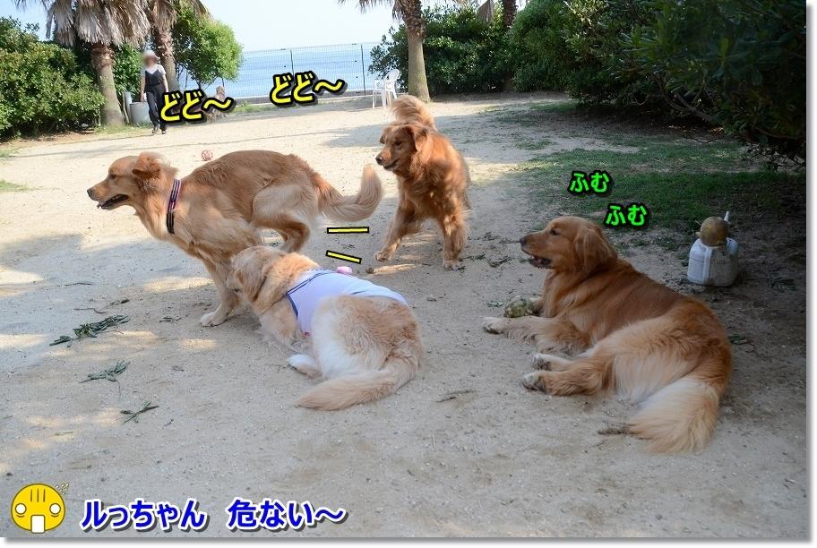 DSC_6055逃げるじょ~ ぽへ~
