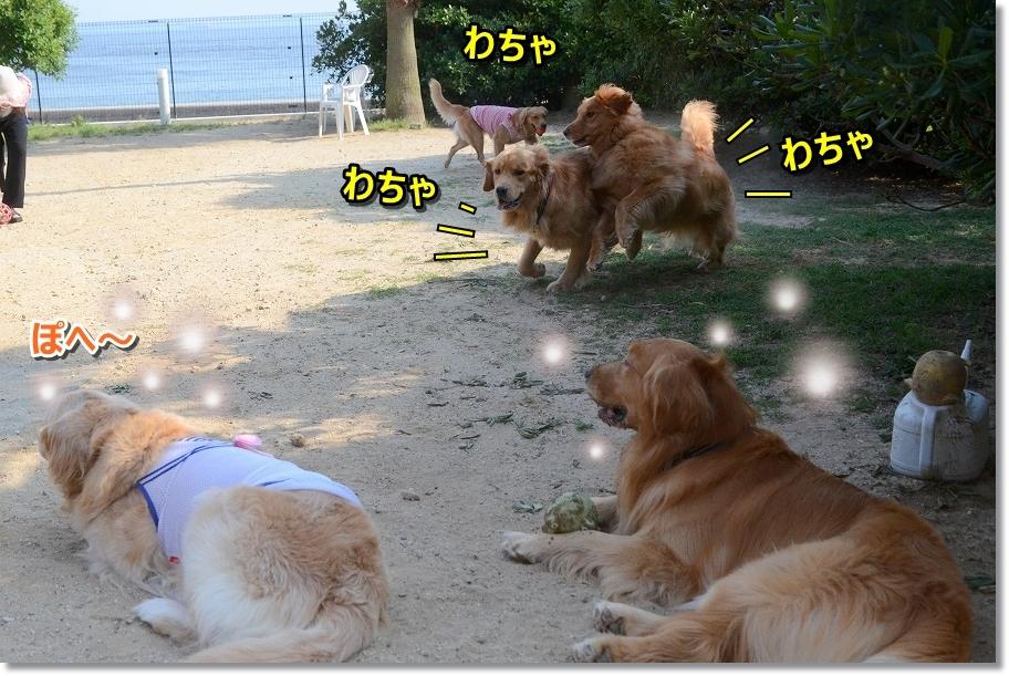 DSC_6057わちゃわちゃ 走る
