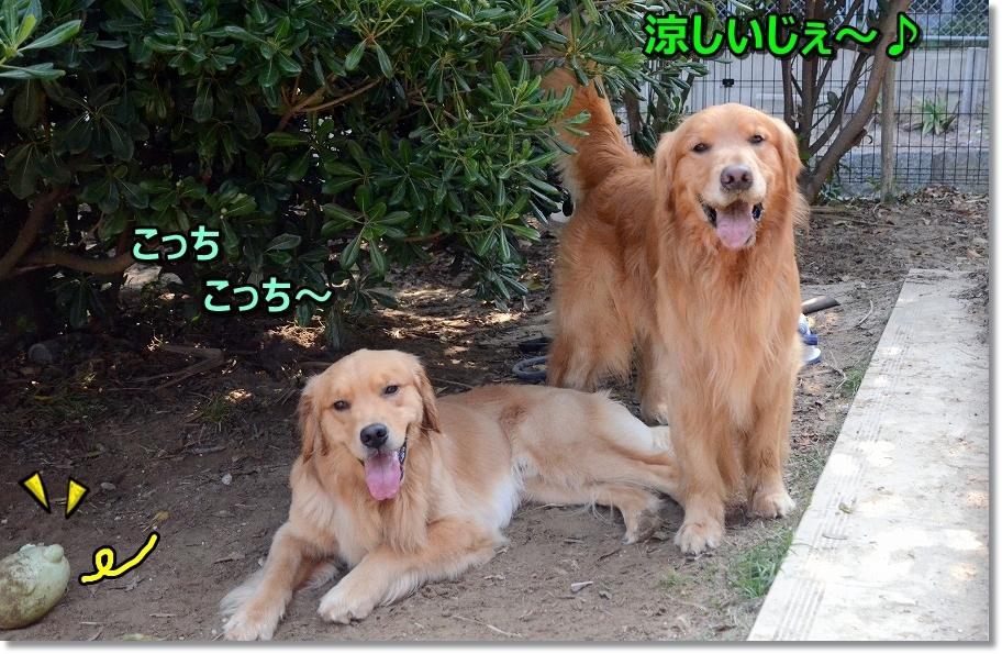 DSC_6067き~ないやつは?