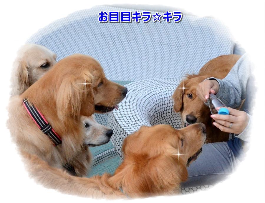 DSC_6077 お目目キラ☆キラ