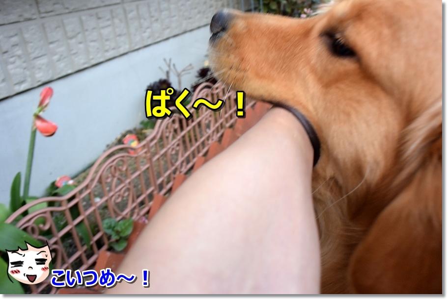 DSC_8156 ぱく~! こいつめ・・・