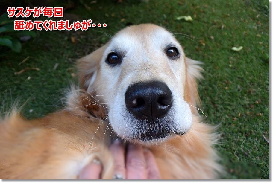 DSC_8161黒豆ちゃん
