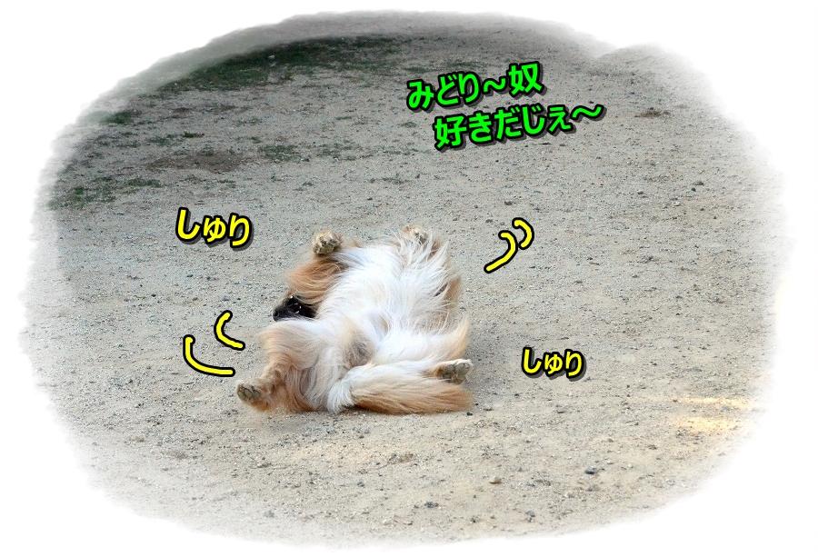 DSC_5312うひょひょ~