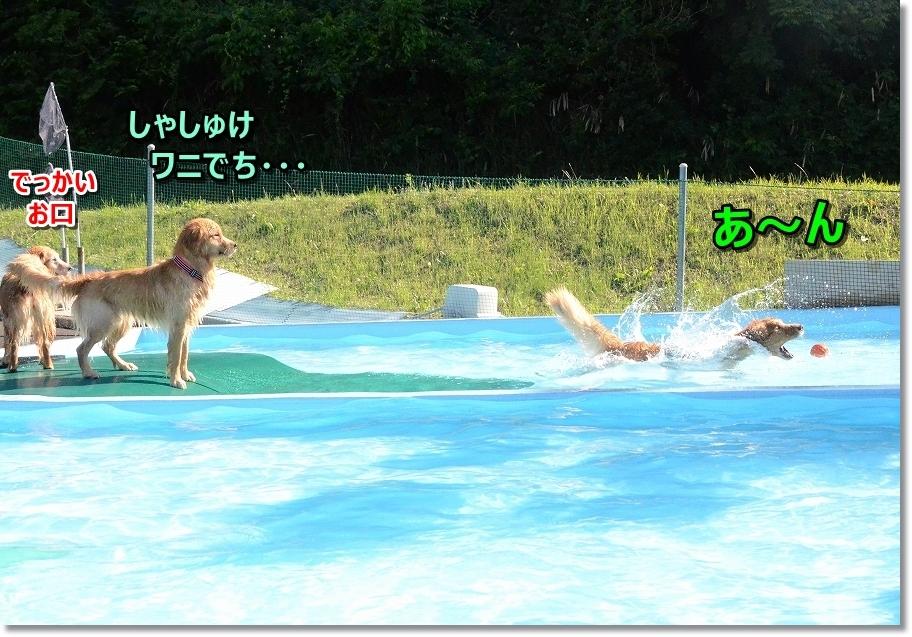 DSC_5697ふむふむ