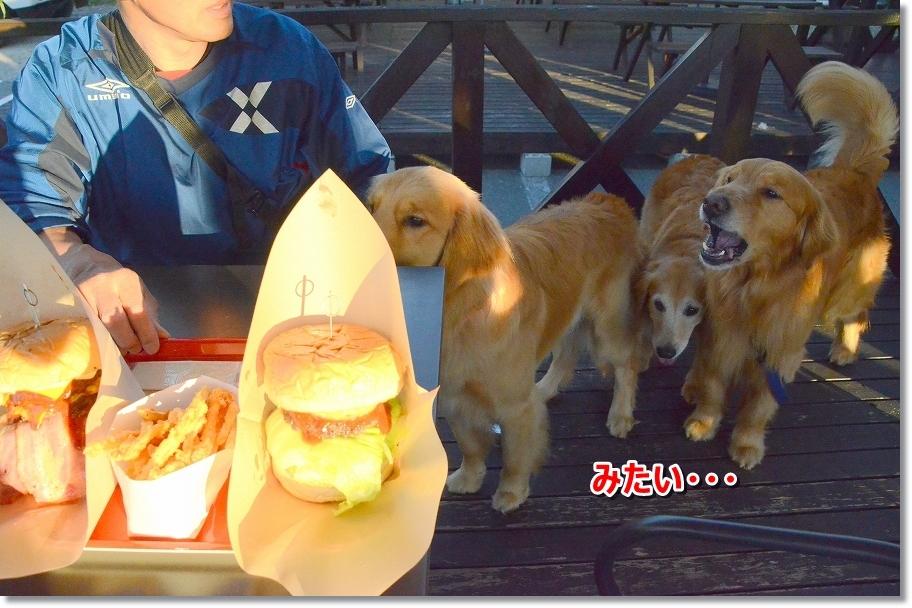 DSC_5784おいらも一緒に食べる