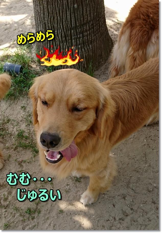 DSC_0117じゅるいじょ