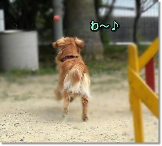 DSC_8110わ~い