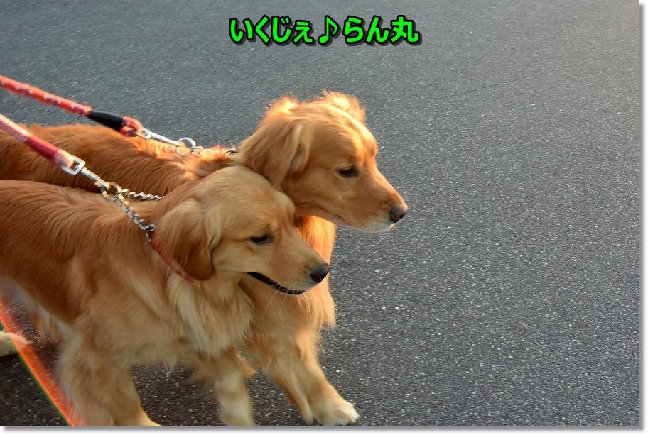 DSC_8173いくじぇ~