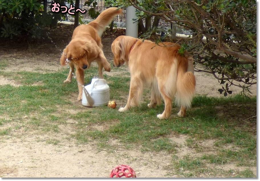 P1040384おとちゃんと水遊び?