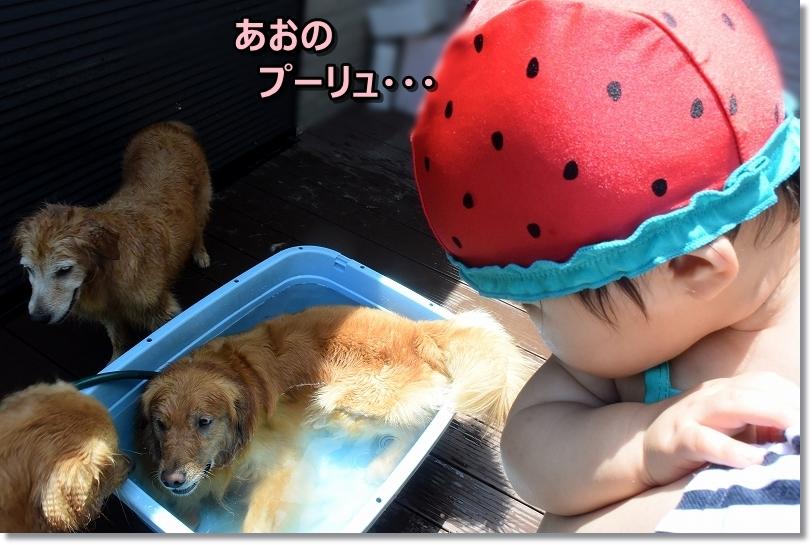 DSC_8349あおのぷーりゅ
