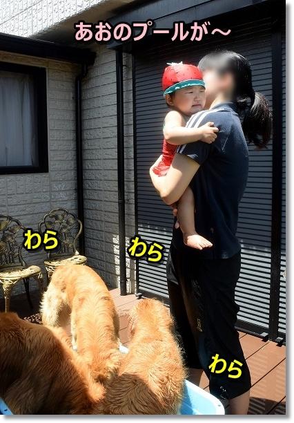 DSC_8368ばっち~でちゅ わらわら7