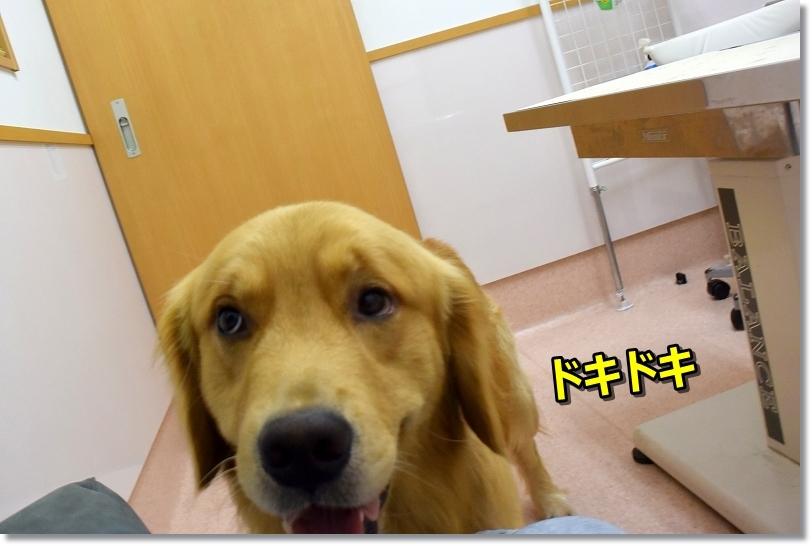 DSC_8463診察室 ドキドキ