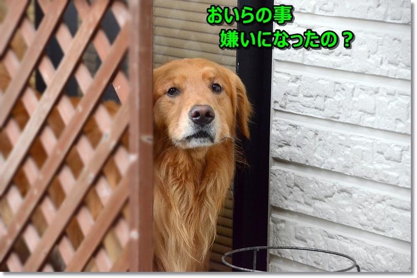 DSC_6931おねぇ?