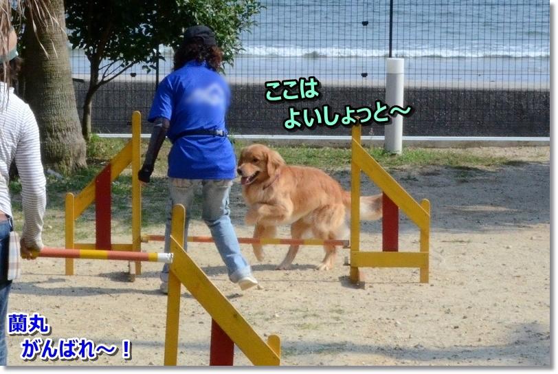 DSC_7080蘭丸