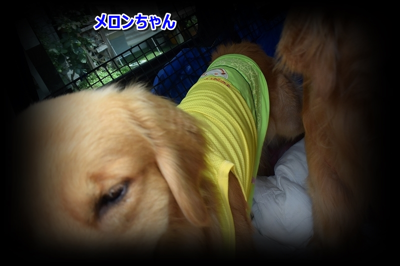 DSC_8477メロンちゃん