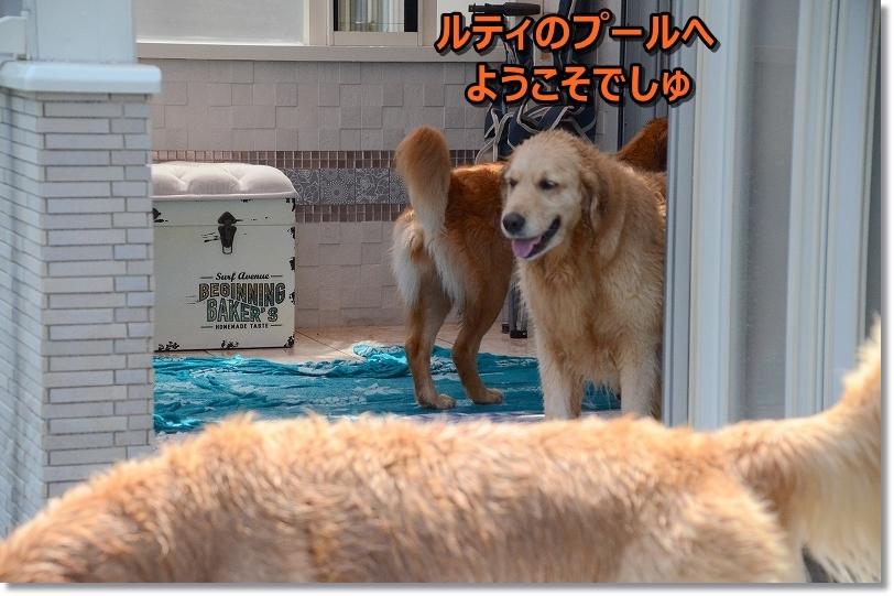 DSC_7308我が家のプールへようこそ♪