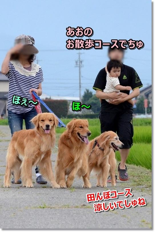 DSC_7395あおの田んぼお散歩コースでちゅよ ほ~