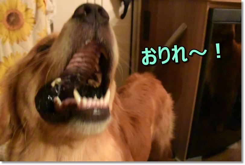 DSC_8576あだ~