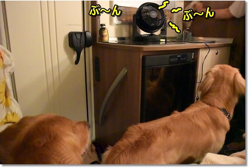 DSC_8582暑くならないようにサーキュレーター回すね