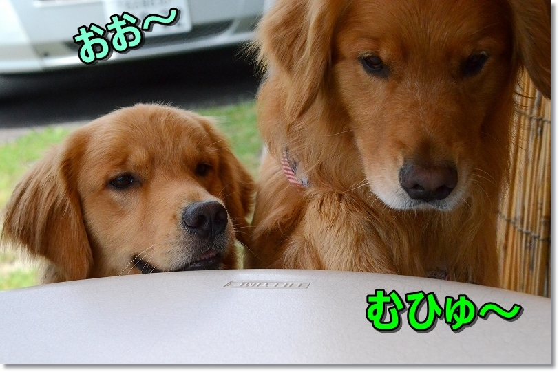 DSC_7834おお~
