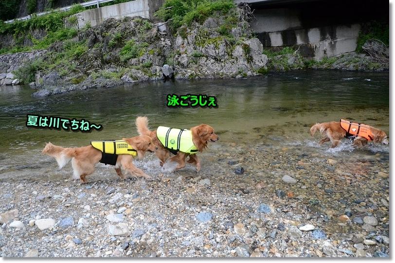 DSC_6623夏は川だ~
