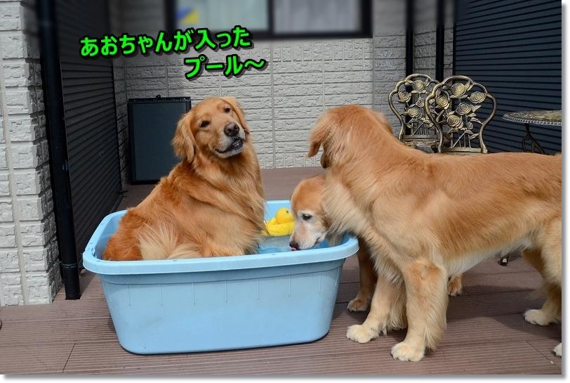 DSC_7216あおちゃんが入ったプールにおいらも入るのだ